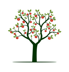 green tree with red apples vector image vector image