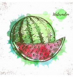 Watercolor watermelon sketch vector
