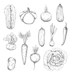 Freshly plucked healthy vegetables sketches vector