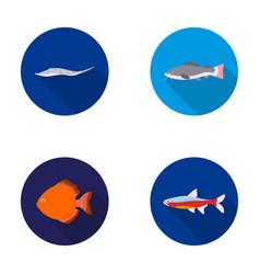 Angelfish common barbus neonfish set vector