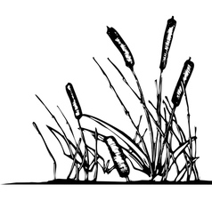 Pond reeds vector