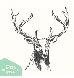 Sketch deer head vintage drawn vector image