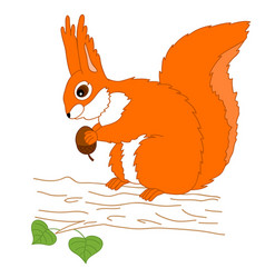 squirrel with acorn sitting on the tree vector image