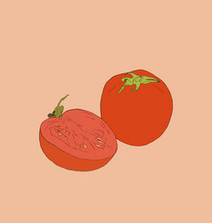 tomato drawing isolated tomato and sliced piece vector image