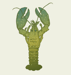 american lobster for artwork vector image