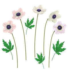 anemone vector image vector image
