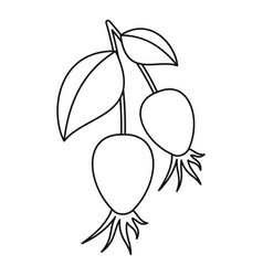 dogrose berry bunch icon outline style vector image