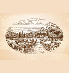 vineyard by the sea vector image vector image