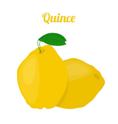 Quince healthy fruit vegetarian food vector