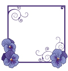 Violet pansies vector