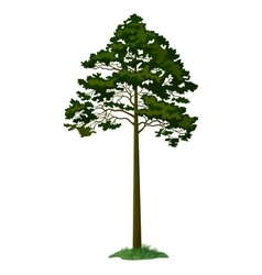 Pine Tree and Green Grass vector image vector image