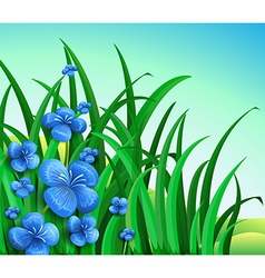 A garden in the hill with blue flowers vector