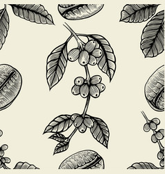 Branch of coffee vector