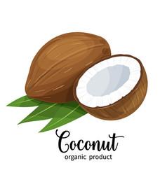 coconut in cartoon style vector image