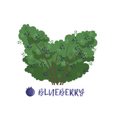 Blueberry berry bush with name vector