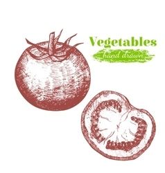 Tomato Hand Draw Sketch vector image
