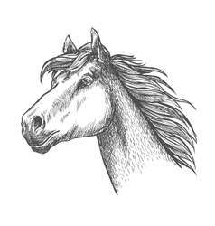 Galloping horse of andalusian breed sketch symbol vector image