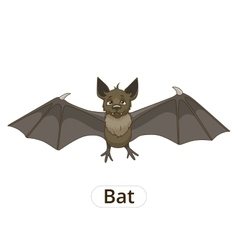 Forest animal bat cartoon vector image