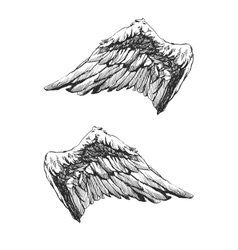 Hand drawn angel wings eps8 vector