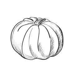 doodle pumpkin vector image vector image