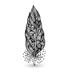 Decorative feathers vector image vector image