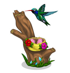 Green-blue bird hummingbird and it nest with eggs vector