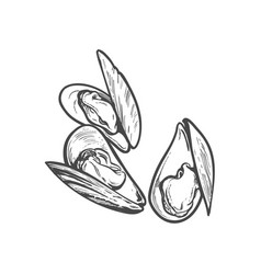 sketch cartoon sea mussel isolated vector image