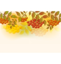 Border of bunches rowan and leaves eps10 vector