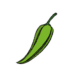Green chili pepper vegetable nutrition food fresh vector
