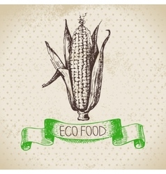 Hand drawn sketch corn vegetable eco food vector