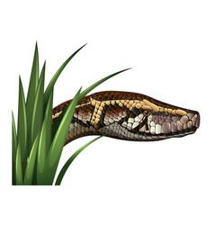 Snake head behind green grass vector