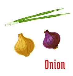Onion vegetable with sprouted green leaves icon vector