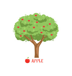 Apple garden fruit tree with red apples and name vector