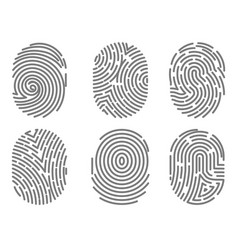 set of fingerprint types with twisted lines signs vector image vector image