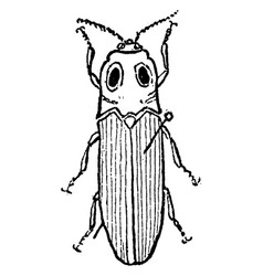 Snapping beetle vintage vector