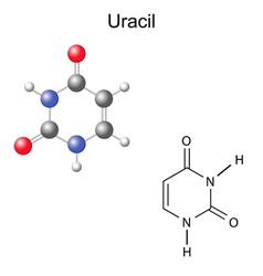 Chemical structural formula and model of uracil vector