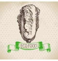Hand drawn sketch pe-tsai vegetable Eco food vector image