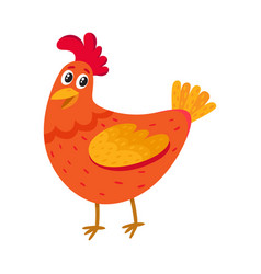 funny cartoon red chicken hen standing and vector image