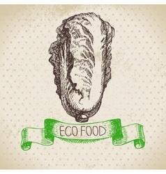 Hand drawn sketch pe-tsai vegetable eco food vector