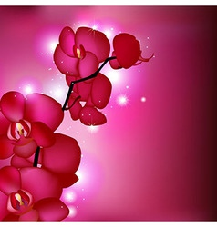 Pink orchids vector