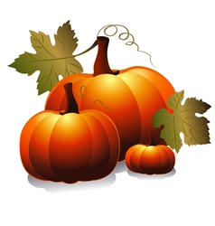 Three pumpkin vector