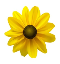 Black Eyed Susan vector image
