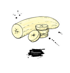 Banana sliced and peeled piece drawing vector