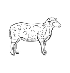 doodle sheep vector image vector image