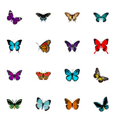 realistic lexias pipevine tropical moth and vector image vector image