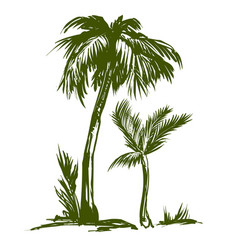 palm collection hand drawn vector image vector image