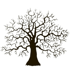 tree without leaves silhouette vector image