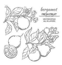 bergamot set vector image vector image