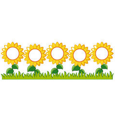 sunflowers garden with writing space vector image