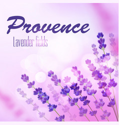 Provence lavender field background vector
